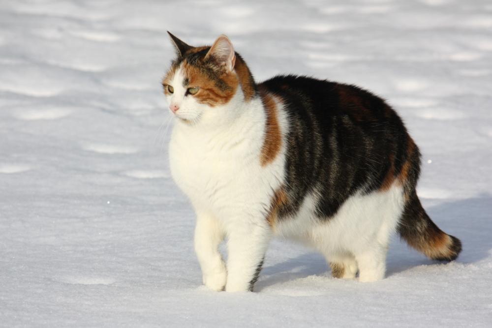 divoké divoké mačička