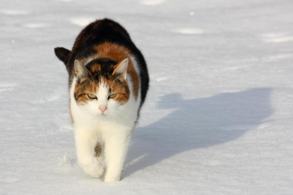 Zadarmo nahé mačička obrázok