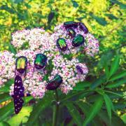 Najatraktívnejší kvet v chotári