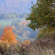 Jesenné variácie na jeden strom