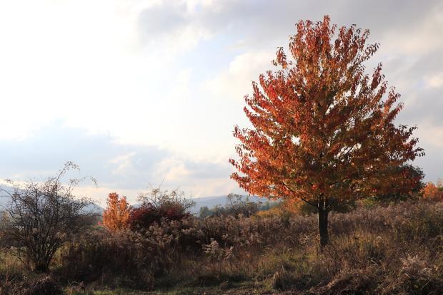 Jesenné variácie na jeden strom 2