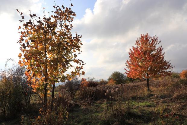 Jesenné variácie na jeden strom 5