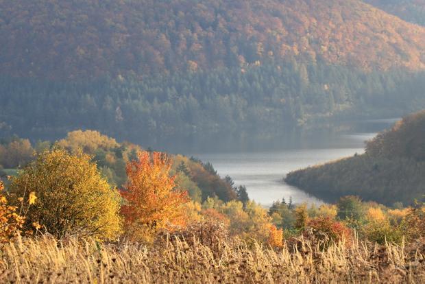 Jesenné variácie na jeden strom 6