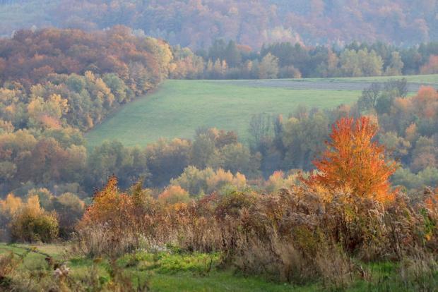 Jesenné variácie na jeden strom 4