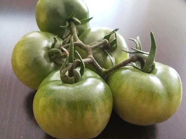Zavárané zelené paradajky | Recept | Betka Mokos