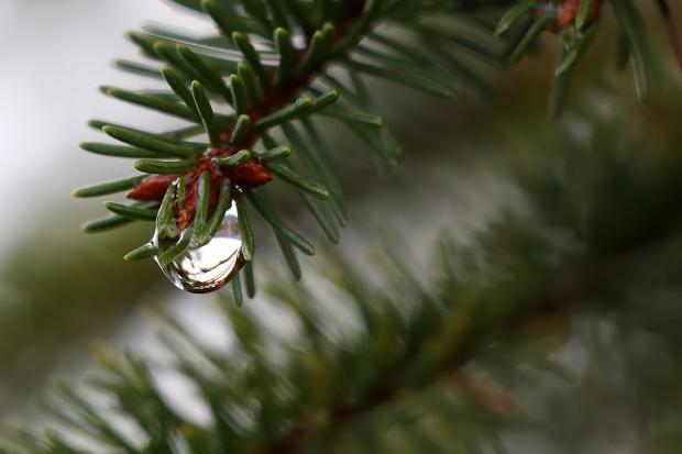 Prekvapenia upršanej zimy 5