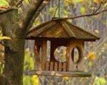Krmidlá pre vtáčiky